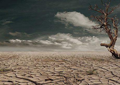 Ist in so einer Wüste wirklich noch Leben möglich?