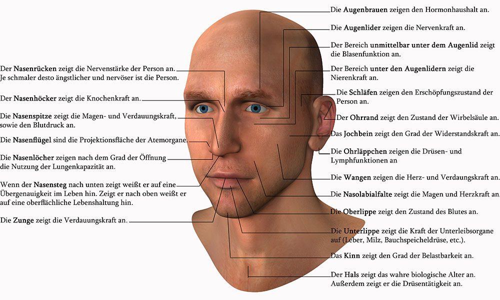 Die Grafik zeigt, was unser Gesicht über unseren Charakter und unsere Eigenschaften verrät