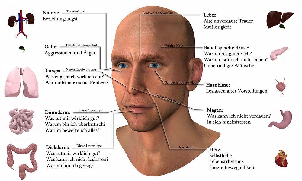 Die Grafik zeigt, wie man Organschwächen am Gesicht erkennen kann